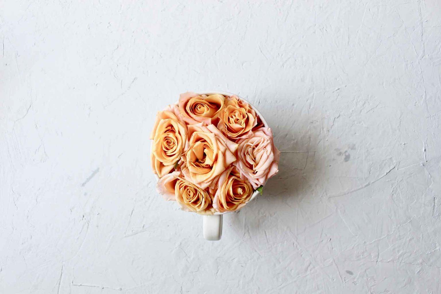 flowers-minimalistic-SPKZAHE-1.jpg